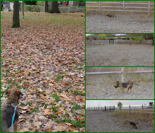 Dog at the dog park