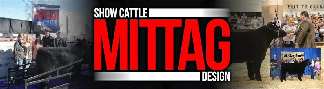 Mittag Show Cattle