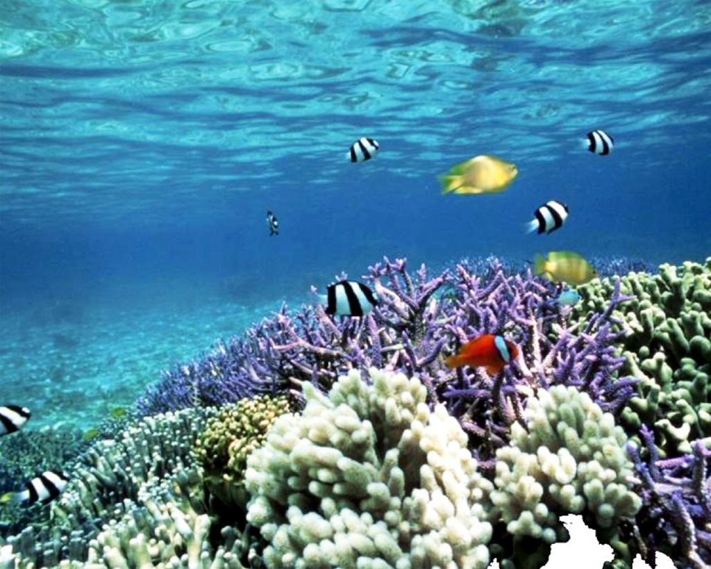 Mi blog n utico fotos del mar - Fotos fondo del mar ...