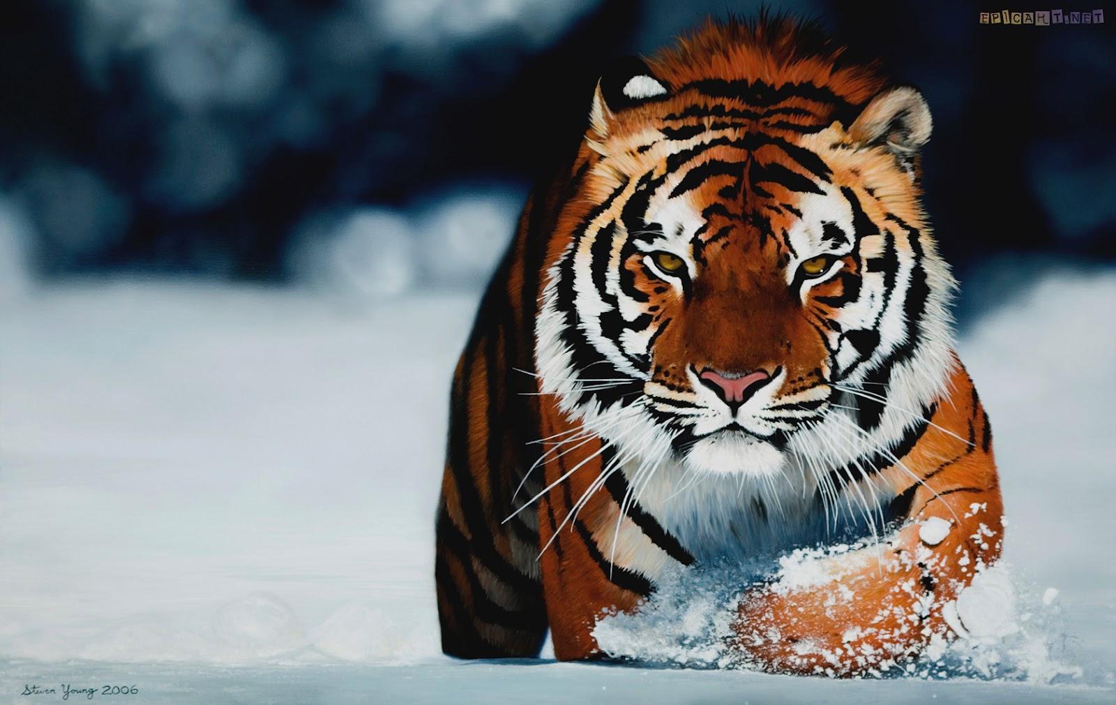 http://4.bp.blogspot.com/-GHEhNwUIgGI/T1hh8OaOECI/AAAAAAAABg0/K6Py1CZLo_w/s1600/siberian-tiger-wallpaper+3.jpg