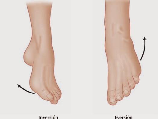 Radiologia Básica: Movimientos del cuerpo