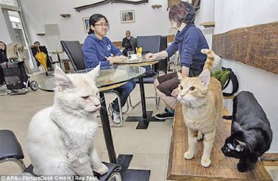 3 kucing Cafe Neko menguasai sebuah meja dalam kafe berkenaan.