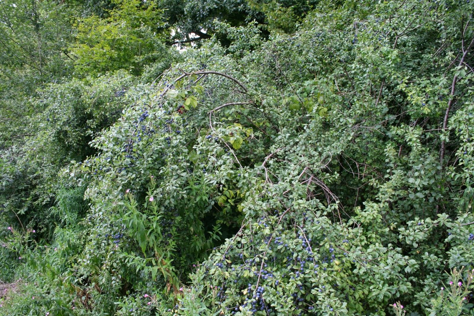 Permafor t mycogardening les ponts mycorhiziens dans - Quelle plante dans une jarre ...