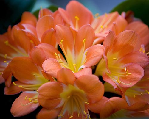 Suelo creations traditions lore la fleur for Fleurs amaryllis bouquet