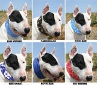 Hundekühlhalsband