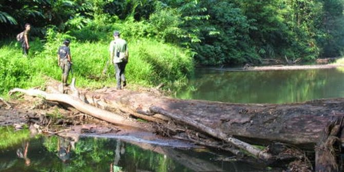 Hutan hujan tropis Sumatra