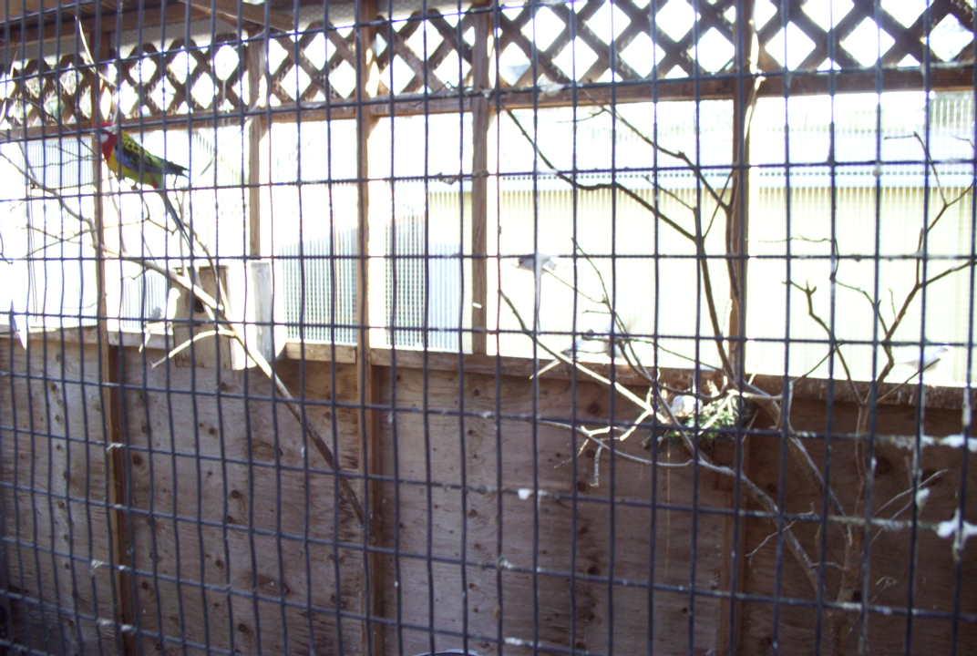 The Splendid Bourke Bird Blog: Bird Aviaries, Outdoor and Indoor