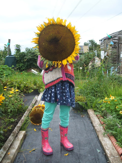 September on the allotment: super sunflowers and losing the battle against the weeds