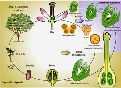 Todosobrelabotanica modo de reproduccion de las plantas - Cuando plantar frutales ...