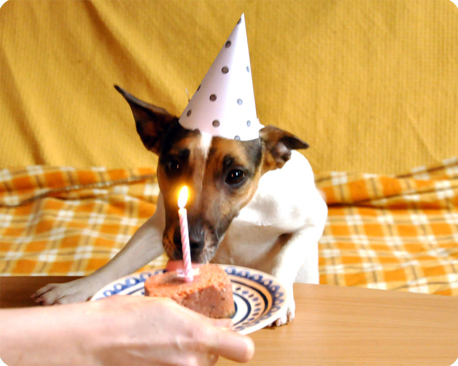 Happy Birthday Fifi Dog Party Hat Template