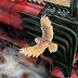 Edição ilustrada de Harry Potter e a Pedra Filosofal é lançada hoje! Confira a entrevista do Pottermore com o ilustrador