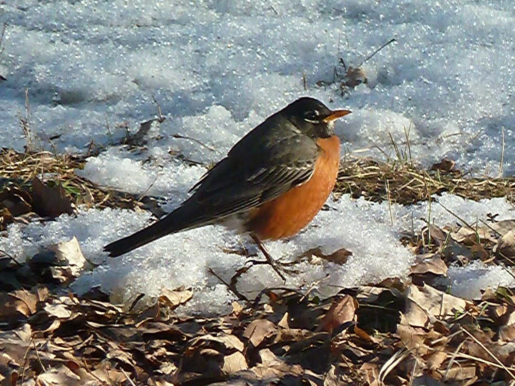 penelopedia nature and garden in southern minnesota winter in