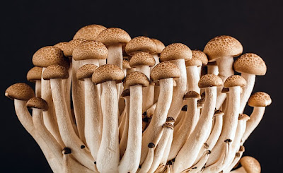 Mushrooms IVJ Nature Issue August 2015