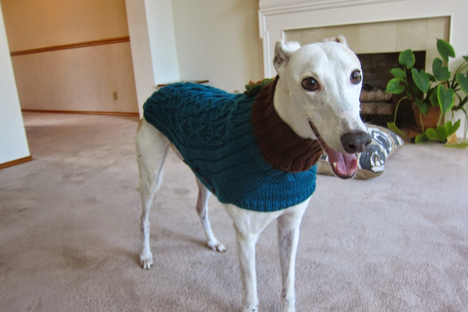 Greyhound Knit Sweaters: Blue green sweater for a girl dog
