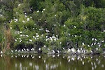 This is the Everglades National Parks