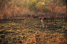 Μαπουμαλαγκα (Νοτια Αφρικη), η Γη του Ανατελλοντος Ηλιου