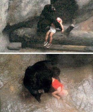 kisah sebenar gorila selamatkan budak