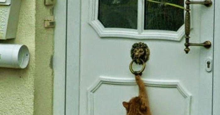 Cat Knocking On Door : Door knock cat