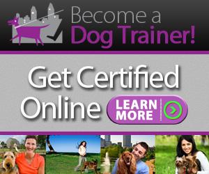 Canine Club Academy