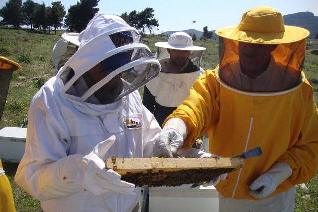 Σεμινάρια Μελισσοκομίας στο Σουφλί