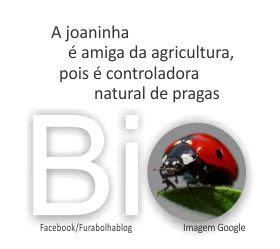 joaninhas, lavoura, agricultura, fertilizante orgânico