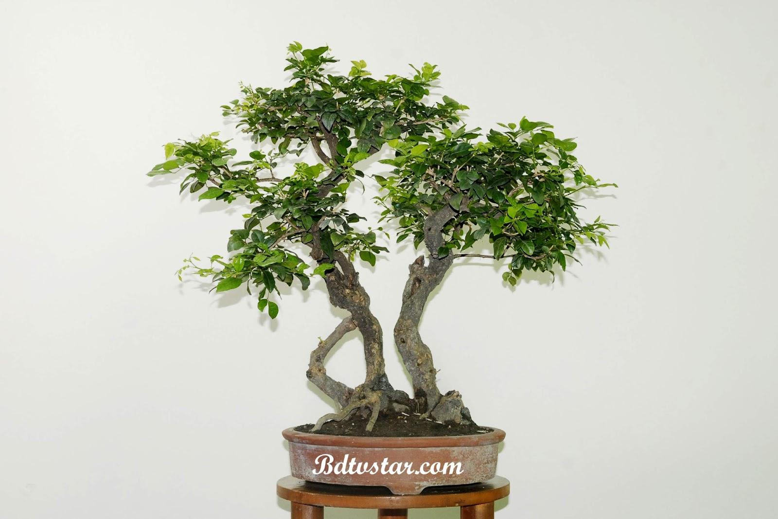 bonsai wallpaper 03 ndash - photo #38