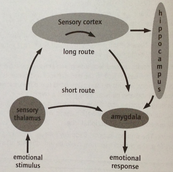 the important role of biological and cognitive factors in interacting with emotion To what extent do cognitive and biological factors react in do cognitive and biological factors interact in and biological factors react in emotion.