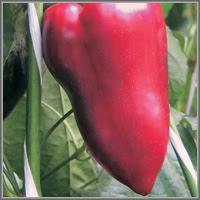 Сладкий перец сорт «Нафаня»