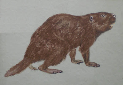 extincto castoridae Trogonotherium