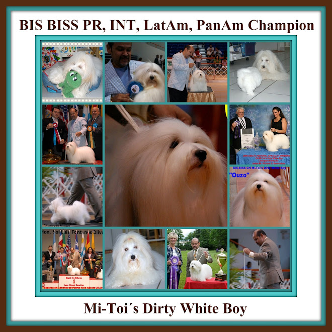 Multi Ch. BIS BISS Mi-Toi's Dirty White Boy