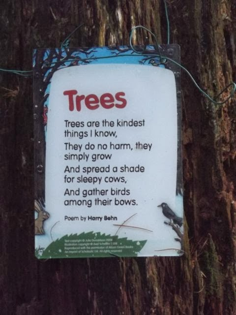Stick man trail Whinlatter tree poem