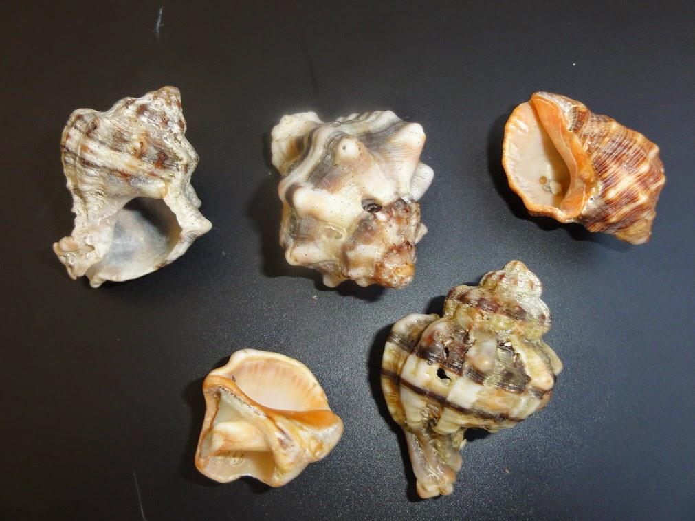 caracoles en Alicante