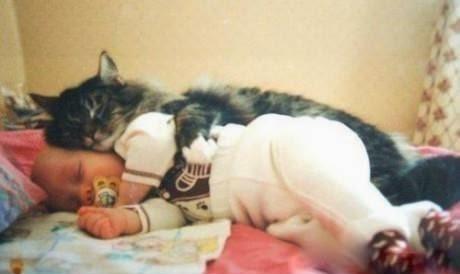 Hati-Hati Tidur Bersama Kucing