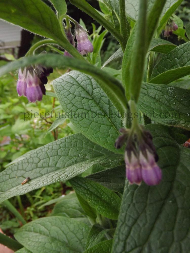 comfrey mature personals Mature woman posted: 5/4/2007 10:51:28 am this may replace pubic hair length as my fave thread sweet i can hardly wait.