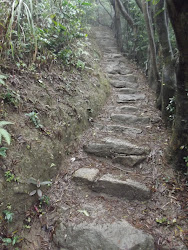 Ancient rock steps through the jungle.
