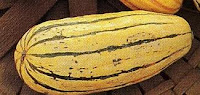 delicata squash winter