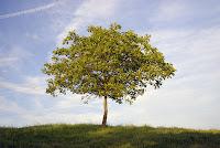 Vai uma árvore mal passada aí?
