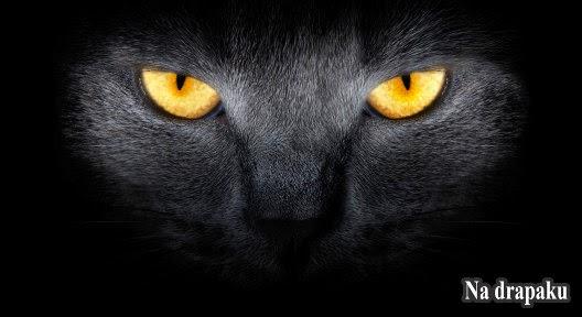 Koty i czary