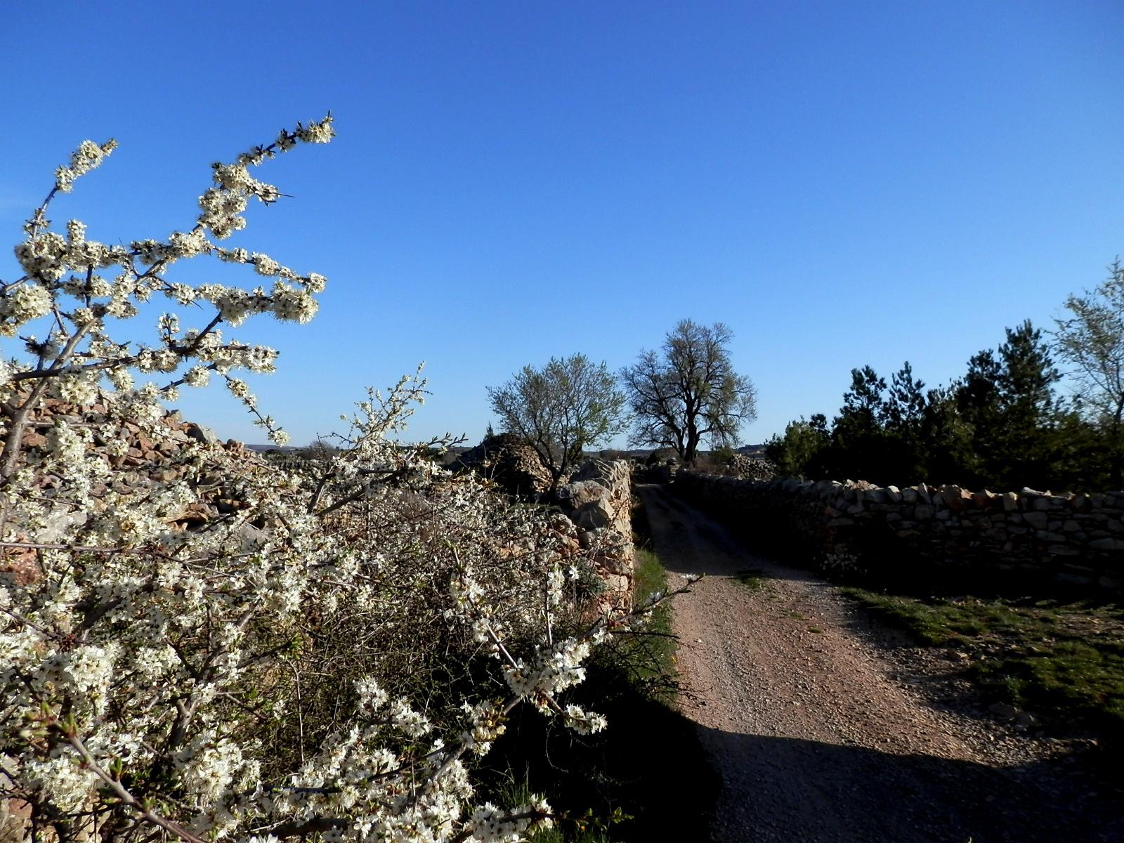 Un so ador por las cumbres en vilafranca donde la piedra for De donde es la roca