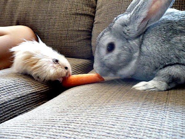 funny animal pics, animal photos, hamster and bunny eat carrot