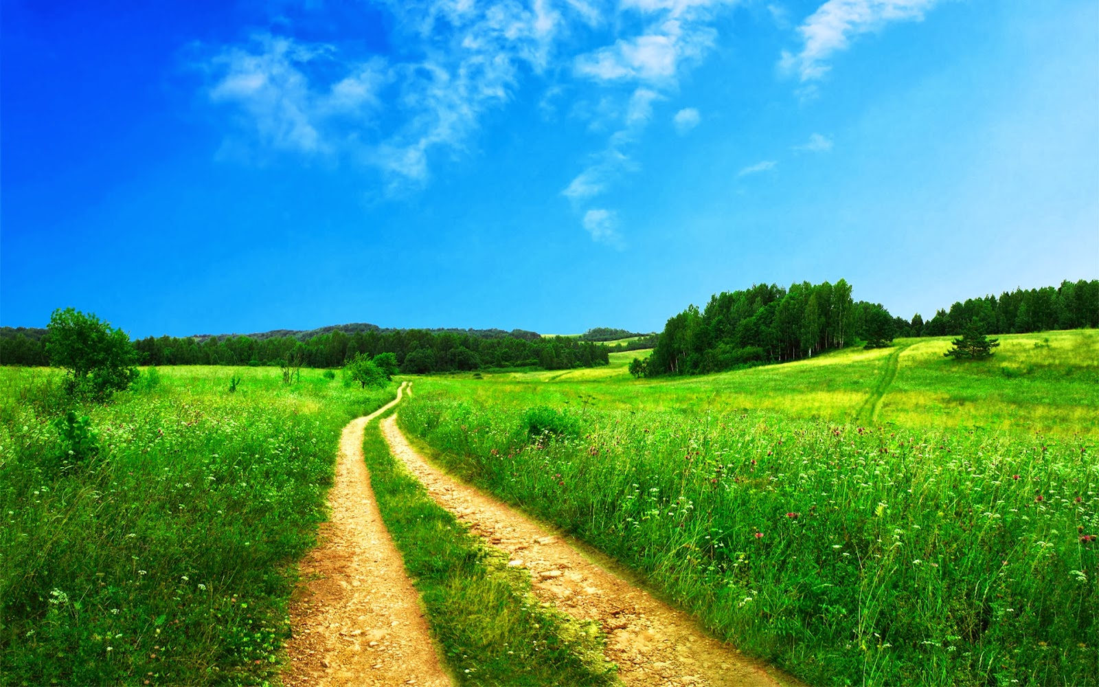 Path Walkway in Green Grass Nature Full HD Desktop Backgrounds Images Wallpapers Free