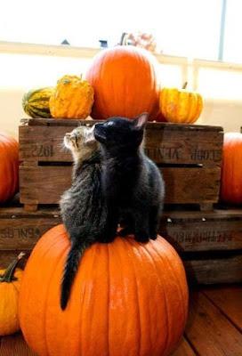 TheJungleStore.com Blog | Cats Sitting On Pumpkin