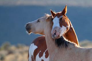 Foto Kuda Mesra