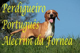 Criações Perdigueiro Português