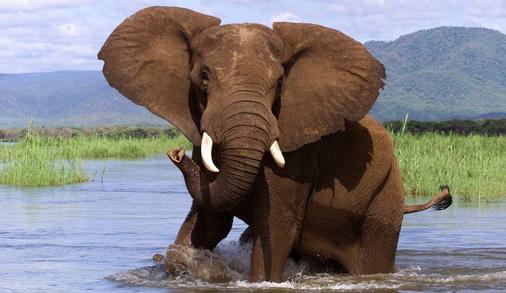 Elephant in Stream