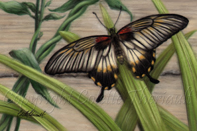 Great Mormon Butterfly Painting in pastel by wildlife artist Colette Theriault