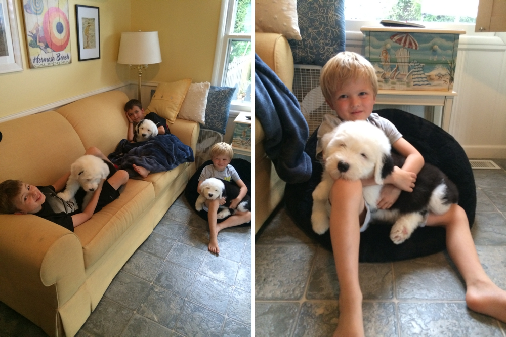 Old English Sheepdog Puppies, SnowDowne, Kids with Puppies