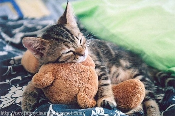 Nice sleeping kitten.