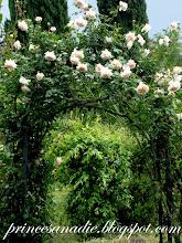 El rosal escondido
