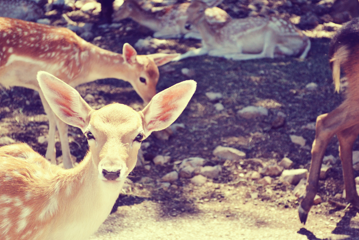 Things I Love About Austin Natural Bridge Wildlife Ranch